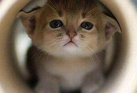 乖巧可爱的猫咪