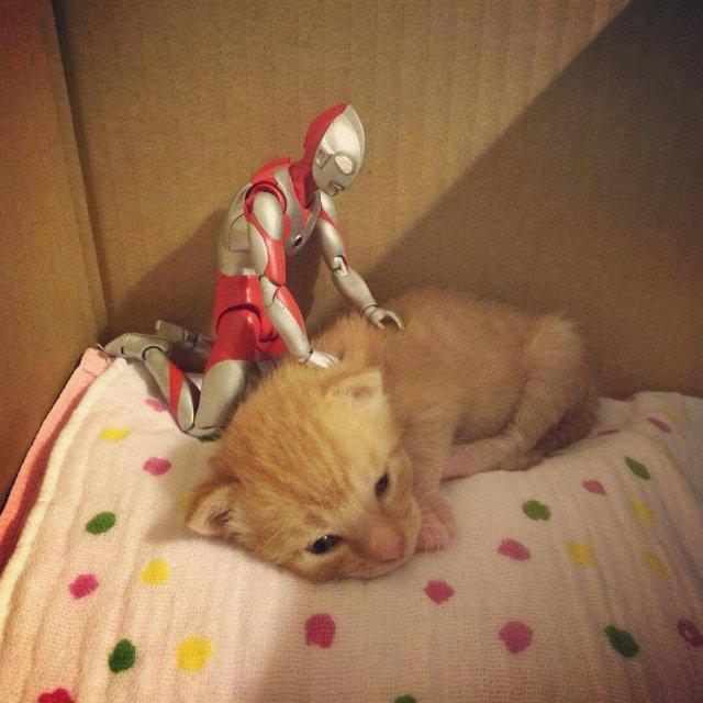 奥特曼守护捡回来的遗弃小猫 画面温馨萌化所有人!