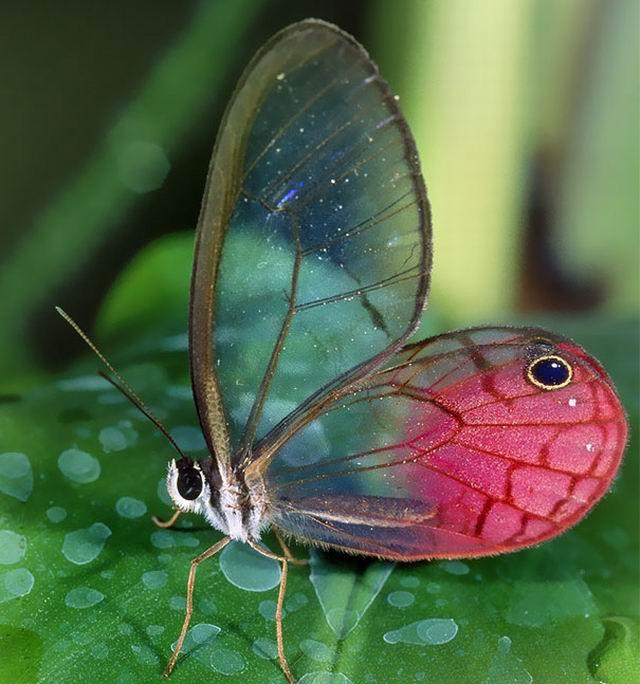 动物模型制作方法蝴蝶