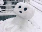 岛国大雪封门宅民脑洞全开打造冰雪世界