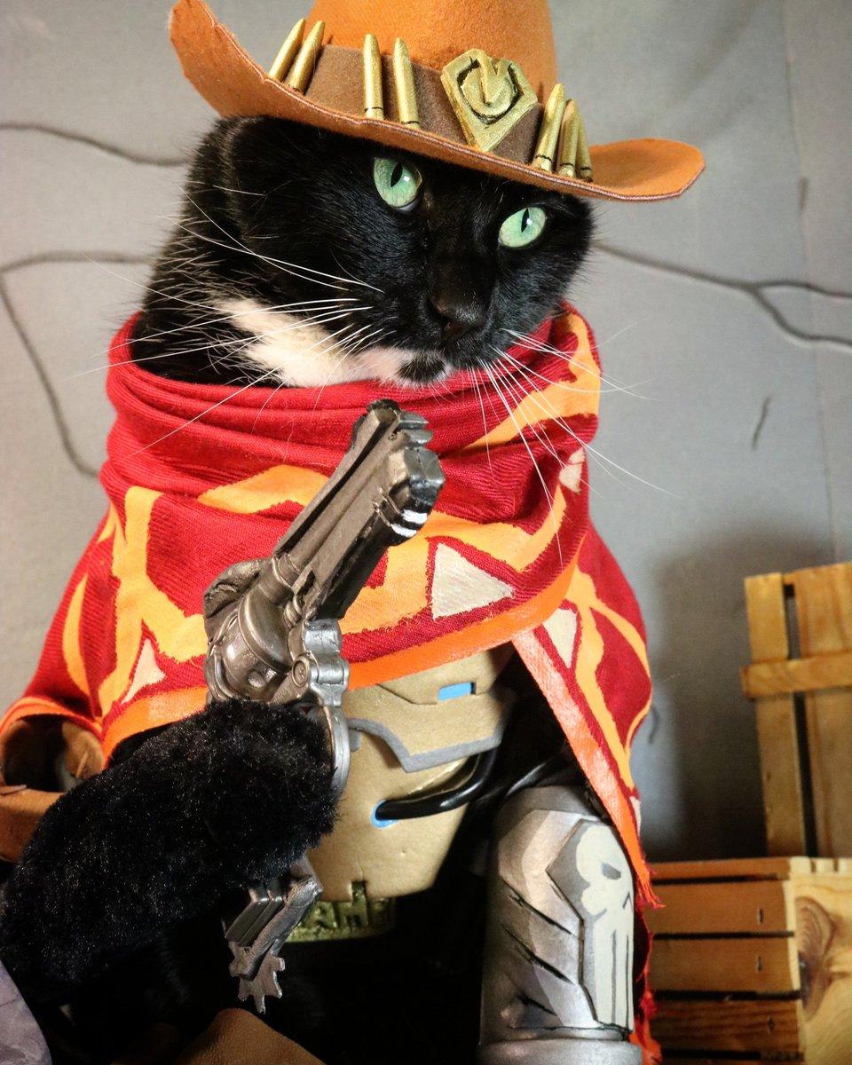 猫猫先锋:专业萌猫守望先锋英雄COS秀