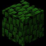 深色橡树树叶