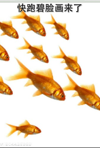 图文:小金鱼的复仇记