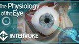 眼睛的生理学