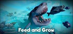 饲料与成长:鱼